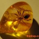 ho-phach-amber